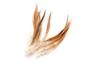 Naturliga fjädrar Orangebrun ca 10st