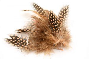 Naturliga fjädrar Brunprickig, 10st