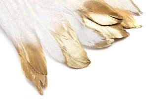 Fjädrar med guldaccent, Vit 15-18cm långa, 5st