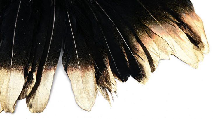 Fjädrar med guldaccent, Svart 15-18cm långa, 5st