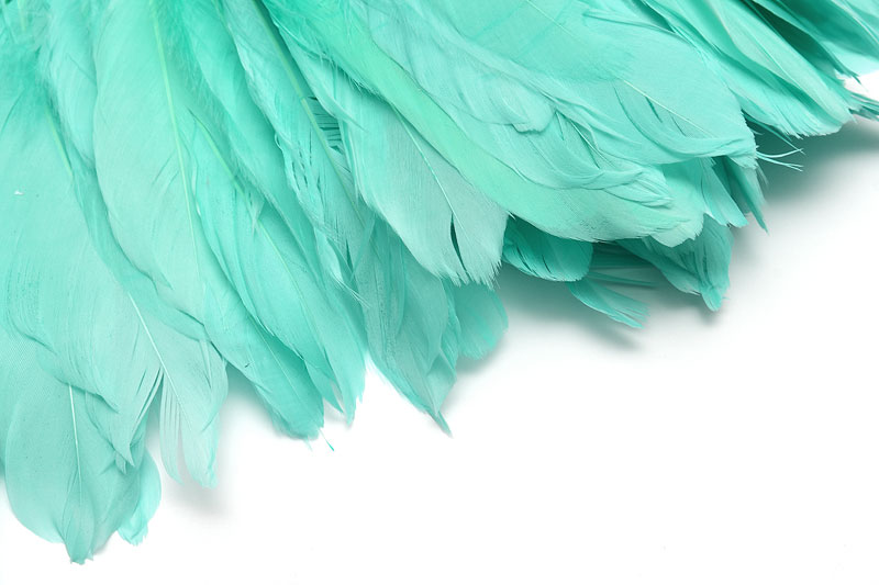 Fjädrar Mint 15-18cm långa, 5st